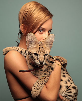 SERVAL VIP-CATS